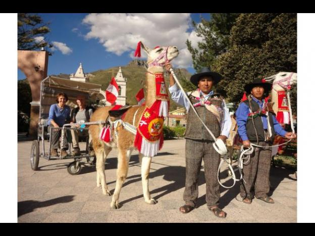 Peru offers tourists new form of transportation: Llama Taxis