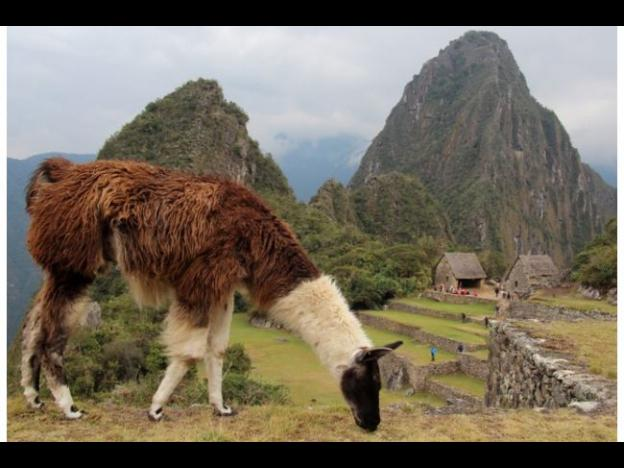 Off the beaten path in Machu Picchu
