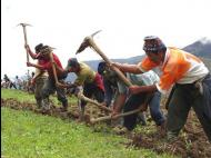 Peruvian agriculture leads growth in Latin America since 2000