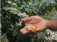 Agro exports fall in 2013, new market opportunities in the U.S.