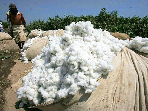 Cotton production woes affect Peruvian textile industry