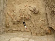 Peru: Archaeologists discover tomb of elite Chimú musician