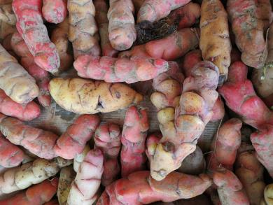 Peru's new Kawsay potato fights anemia, doesn't require chemicals to grow