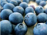 Peru's blueberry exports rose to US$8.8mn between Jan and Nov 2013