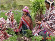 Peru: New organization looks to support small-scale organic farms