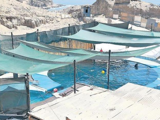 Animal rights groups protest living conditions of dolphins in captivity