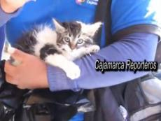 "Protesters in Cajamarca, Peru set kitten on ""rats"" in city hall"