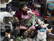 Lima woman cares for a clowder of cats