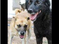 40 orphaned dogs about to be evicted