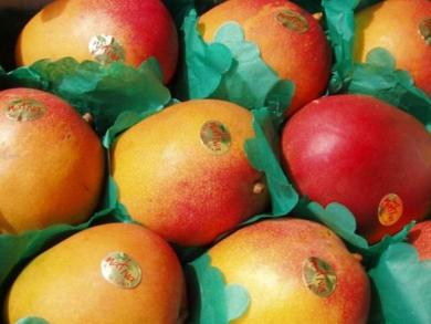 Peruvian mango exports increase by 27%