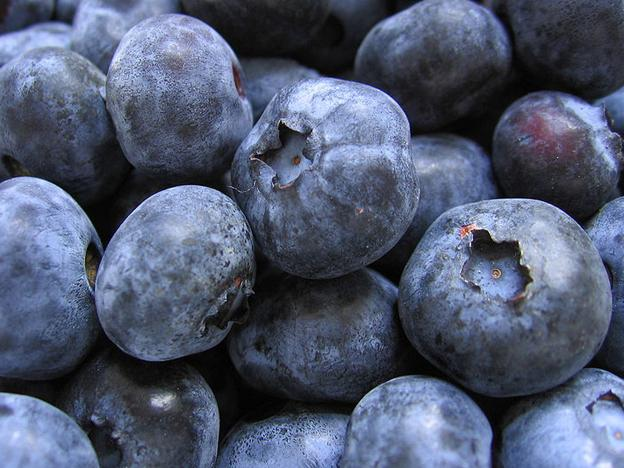Peru on its way to becoming leader in blueberry exports