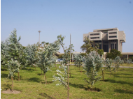 Lima's Pentagonito surrounded by 25,000 trees