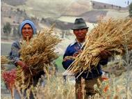 U.S. customs rejects multiple shipments of Peruvian quinoa