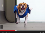 KLM lost & found (& furry) service (VIDEO)