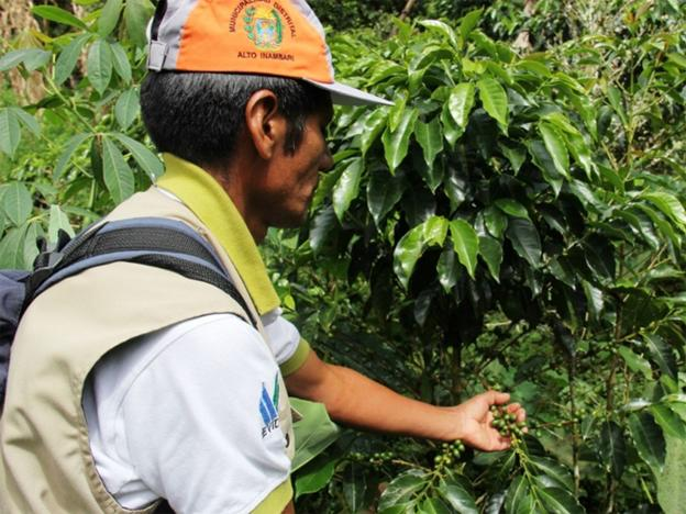 Government funded credits to benefit ex-coca farmers
