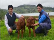 First bovine clone born in Peru