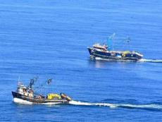 PRODUCE: Anchovy fishing season to open between April and May