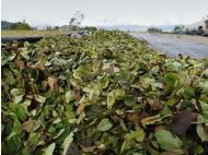 VRAEM: Converting coca fields is a little difficult
