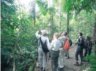 Manú: A paradise for birdwatchers