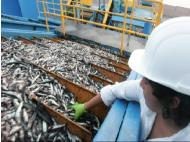 Gestion: Fishing season authorized for March 26 in the south