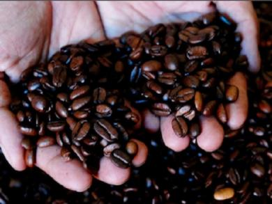 Coffee production to increase 32% this year