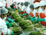 Non-traditional northern macro region exports increased by 13.3% last year