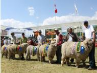 Ayacucho celebrates Semana Santa, Agricultural Fair this week