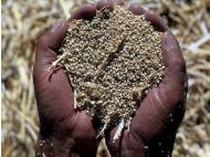 Andean Parliament seeks to protect quinoa with collective mark