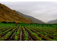 EU buying more than US$ 2b Peruvian produce, biggest organic customer