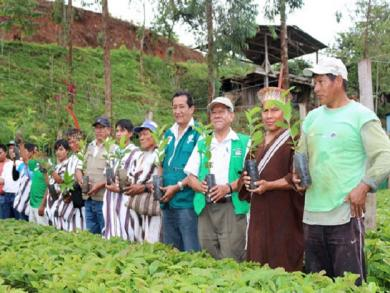 Minagri donates 150,000 coffee saplings to VRAEM growers
