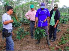 Sustainable coffee and cocoa workshop helps growers