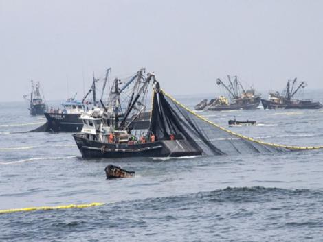 Peru: First half of fishing season grew by over 25%