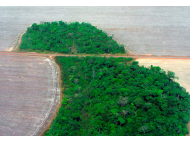 Latin America lost forest land about the size of the UK last decade.
