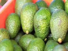 Peru: Avocado production to double in next 4 years