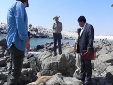 Fisherman prosecuted for killing sea lion