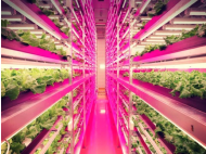 LED-powered vertical farming is changing agriculture