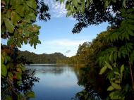 """Int'l Tropical Forests Day: Roundtable discussion takes on """"Tropical forests and you"""" tomorrow"""