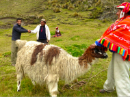 NPO of the month: Llama Pack Project