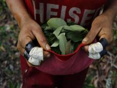The Vraem: Locals are poor and dependent on coca leaf production