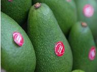 Peru to export 165,000 tons of Hass avocados in 2015
