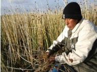 Lake Titicaca residents to export reeds to the Netherlands