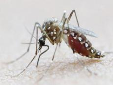 Brazilian scientists find active Zika in saliva and urine