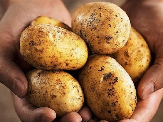 """The Wall Street Journal: """"NASA Really Is Trying To Grow Potatoes on Mars"""""""