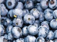Peruvian blueberries to enter Chile market