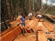How to build an ARC: An interview with the Amazon Rainforest Conservancy's Jana Bell