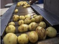 Scientific conference to present on National Potato Day