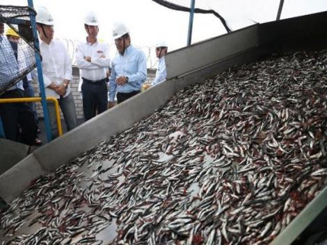 Oceana asks government to stop anchovy fishing season early