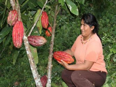 S/6 million soles granted for agriculture