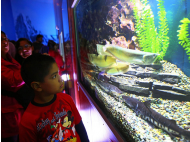 Peru's biggest aquarium opens today