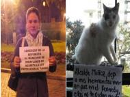 Activists accuse Miraflores for poisoning cats